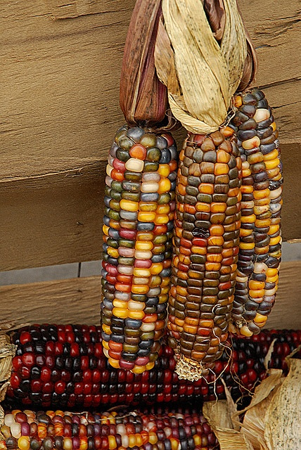 La légende du maïs