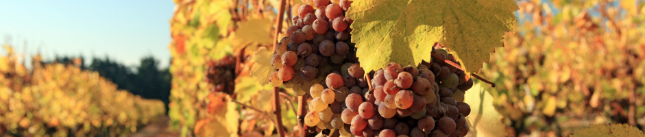 Contes et spectacles autour du vin
